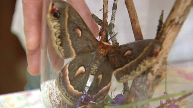 Moths Help Food Grow More Than Thought Scientists