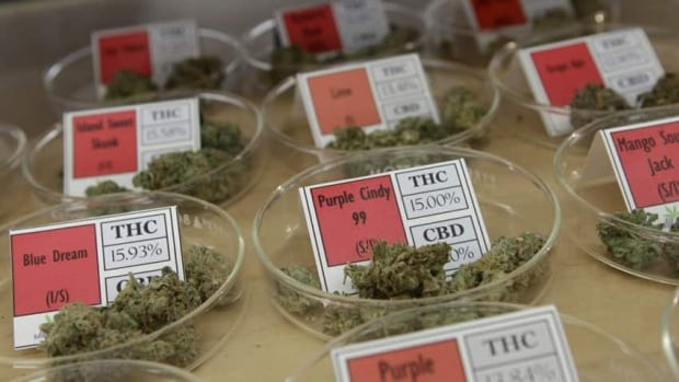 The varying levels of THC in medical marijuana could help to shed light on how safe and effective the drug is for different clinical conditions.