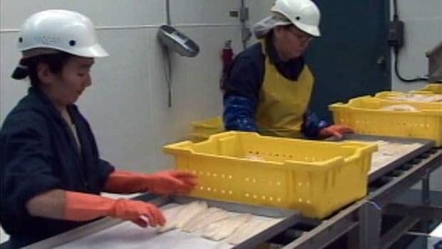 hi-pangnirtung-fish-plant-workers