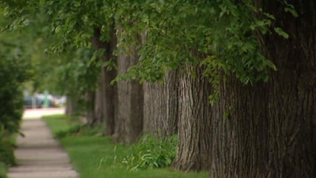 Some residents in Regina are upset with the city because it uses Dursban for its yearly elm beetle spraying program.