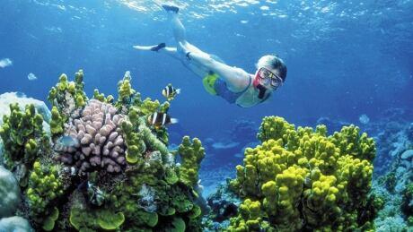 hi-coral-reefs-852