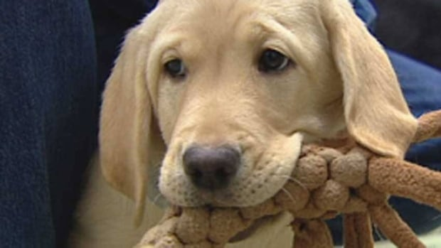Canine parvovirus can be prevented with a vaccination. (CBC)