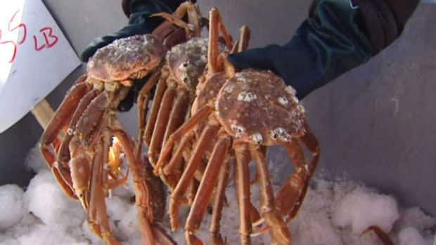 Fishers and their union are upset about the price of crab this season. CBC