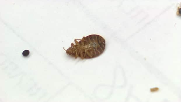 Bed bugs leave behind a blackish-brown substance, so one of the easiest ways to spot them is by using white sheets.