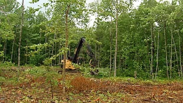 Buffer zone legislation prohibits harvesting trees within 15 metres of a waterway.