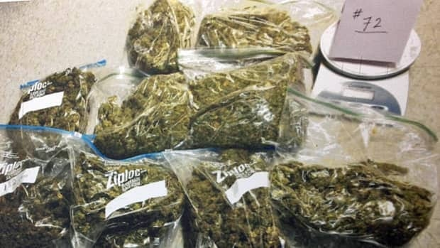 Some of the marijuana police seized in an investigation of a medical marijuana operation in Hamilton on March 7.