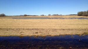 hi-cropland-field-near-pa