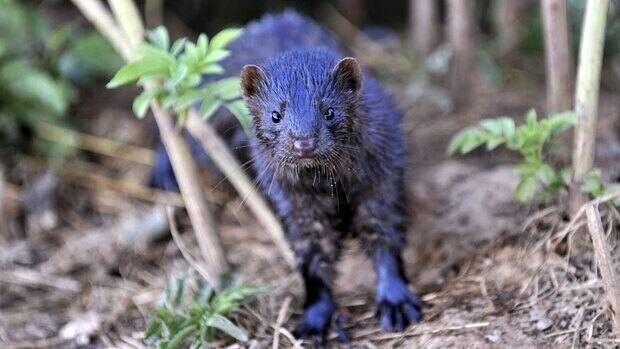 The mink industry generates more than $100 million per year in export sales for the province.