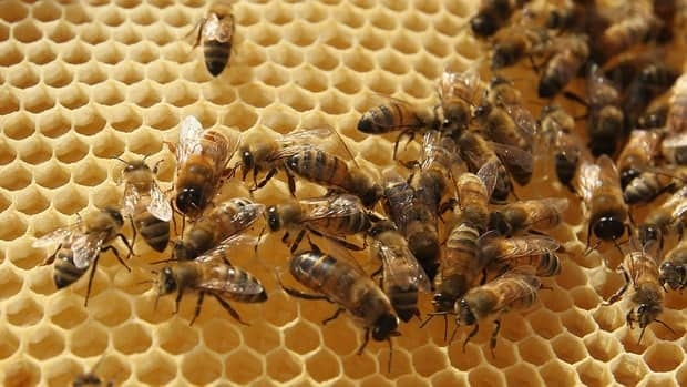 U.S. authorities accused five people, including one Canadian, of flooding the American market with cheap Chinese honey.