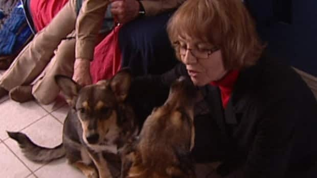 Melanie Crehan, who runs the animal shelter in Sylvan Lake, is worried that dogs are being taken for dog fighting rings.