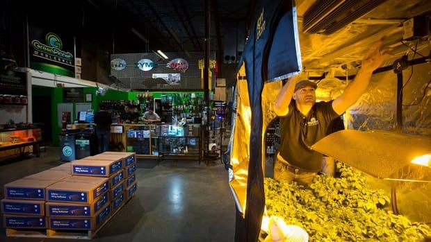 Green Planet Wholesale co-owner and vice-president Justin Cooper adjusts the position of a light in a grow tent for sale at the hydroponics business in Surrey, B.C., on Mar. 28, 2013.