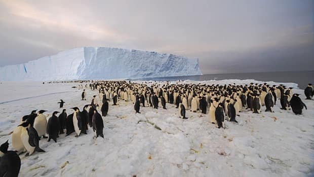The newly-discovered 9,000-strong emperor penguin colony on Antarctica's Princess Ragnhild Coast.