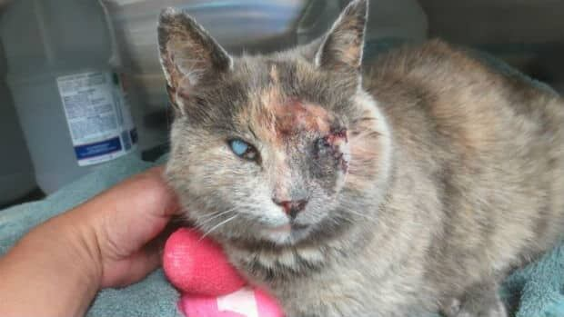 Sona, the cat who was shot in the eyes with a pellet gun, is doing well after surgery.
