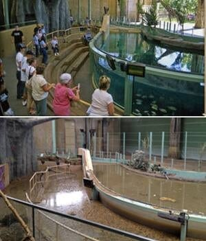 hippos-before-after-300