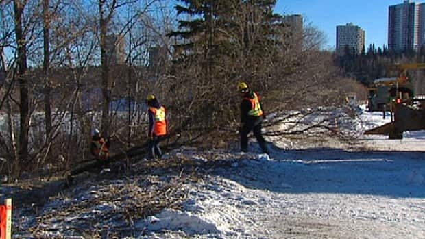 City workers begin removing trees on the south side of the Walterdale Bridge in preparation for construction.