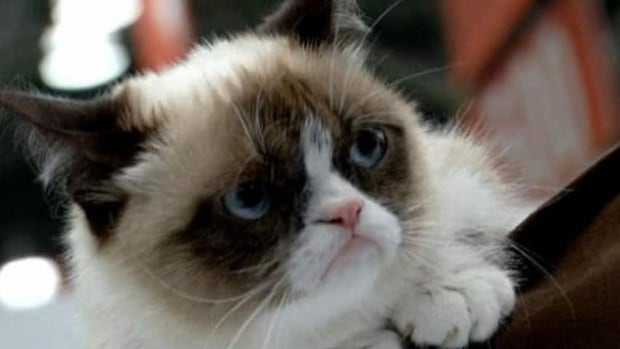 Research shows that the temporoparietal junction is the key brain area that makes you want to share a fantastic new restaurant or another Grumpy Cat meme.