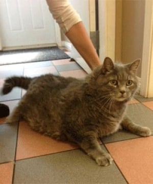 nb-michelin-fat-cat-moncton-spca-v