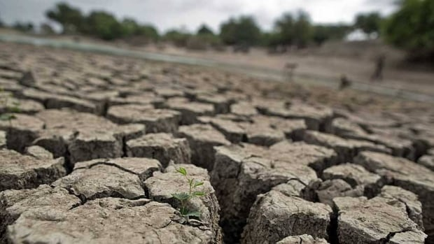 A plant grows from a crack on the dried-up bed of a natural pond at Badarganj village, in the western Indian state of Gujarat, Aug. 5. Armed with the latest monsoon rainfall data, weather experts finally conceded this month that India is facing a drought, confirming what millions of livestock farmers around the country had known for weeks.