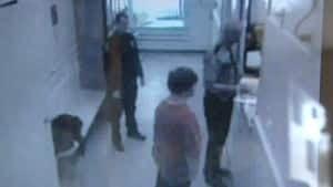 nl-dane-lockup-20121113