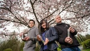 hi-bc-130410-cherry-blossoms-4col