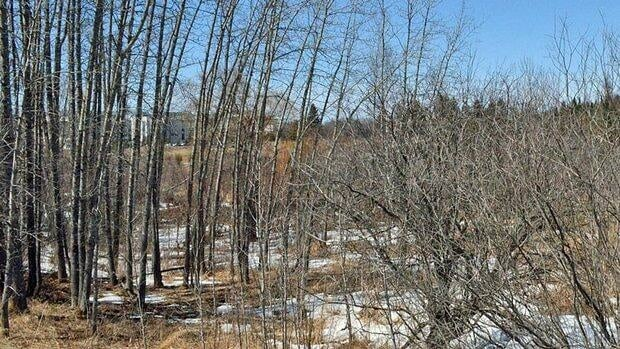 Thunder Bay police are working to identify the remains found in a wooded area between the hospital and a cemetery on the weekend.
