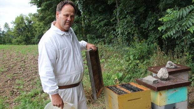 Beekeeper Dave Schuit opens up an almost empty beehive in Elmwood, Ont. Beekeepers want the province to place a moritorium on a pesticide they say is killing millions of Ontario honeybees.