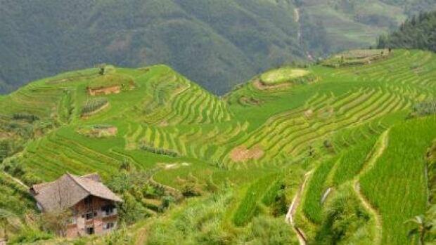 nl-terraced-rice-201307