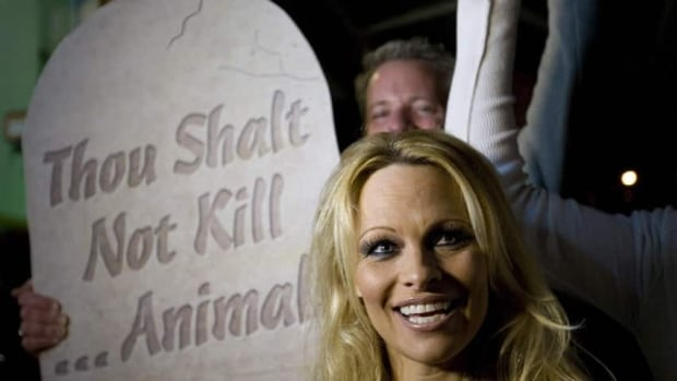 Pamela Anderson, seen here at a press conference for PETA (People for the Ethical Treatment of Animals) in 2011, has called on Alberta premier Alison Redford to help end chuckwagon races at the Calgary Stampede.