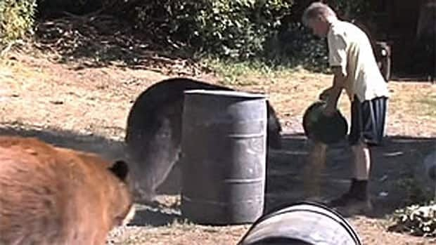 Allen Piche feeds two bears a bucket load of dog food on his rural property in this video posted on Vimeo.