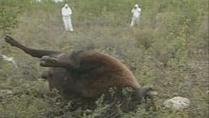 li-bison-anthrax