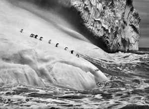 pi-salgado-penguins-300