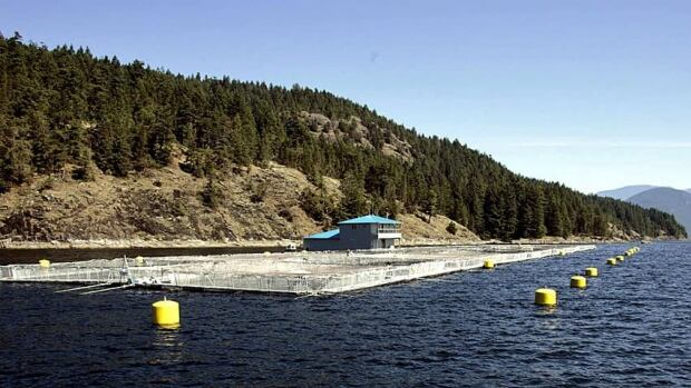 Federal Fisheries Minister Gail Shea announced on Wednesday that the government will not lift a moratorium on salmon aquaculture licenses in B.C.'s northwest.