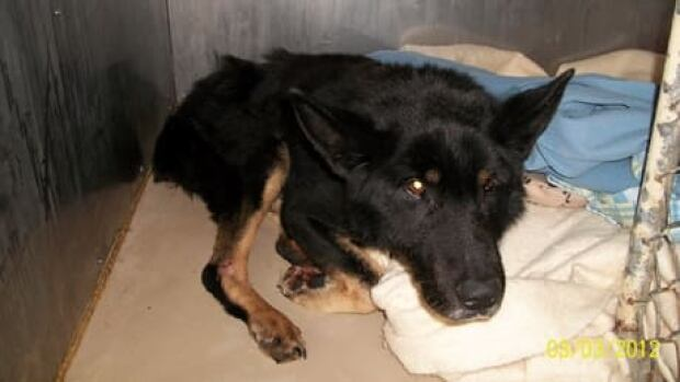 Jacqueline Cooper and Harvey Price of Hillview have been fined in connection with a 2012 case of animal cruelty involving Max, a German Shepherd mix.