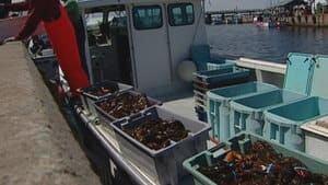 pe-hi-lobster-unloading-852-4col