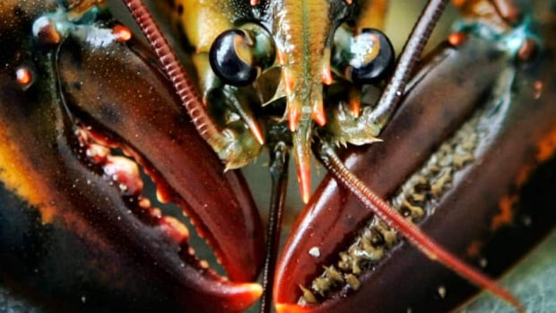 Lobster jobs could go overseas, New Brunswick seafood companies warned.