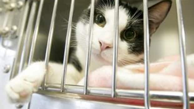 In 2011, the SPCA said it conducted 1,608 investigations