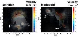 si-jelly-velocity