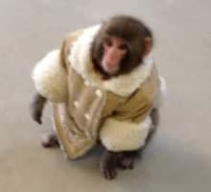 si-220-monkey-pic