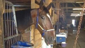 ns-truro-horse