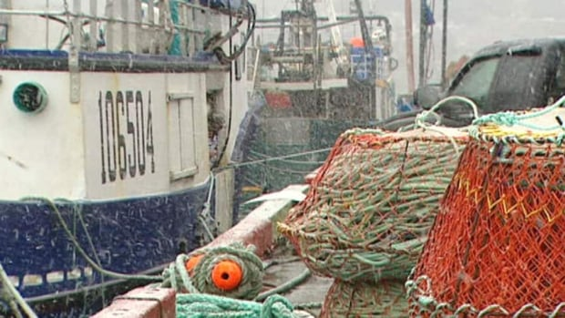The shrimp fishery was worth one third of the entire landed value of Newfoundland and Labrador's fishery in 2013.