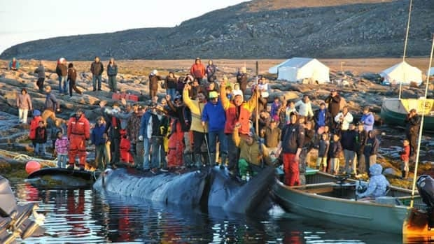 Hunters from Pangnirtung, Nunavut, succeeded in catching a bowhead whale Tuesday afternoon near the historic whaling station at Kekerten Island in Cumberland Sound.