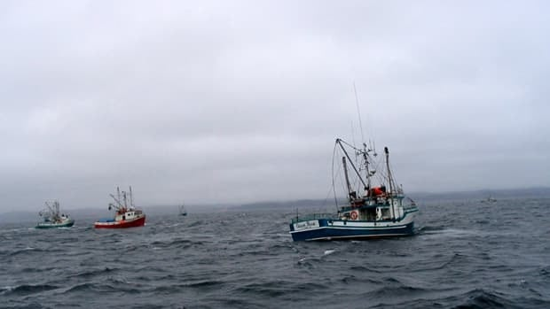 The once-abundant cod now account for a small fraction of the overall value of Newfoundland and Labrador's seafood industry.