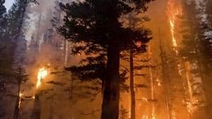 mi-wildfire-cp-rtr38q9u