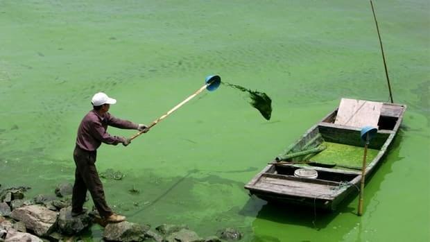 Green Algae Cells Blue-green Algae Cells
