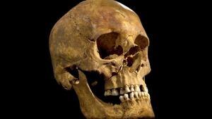 King Richard III skull