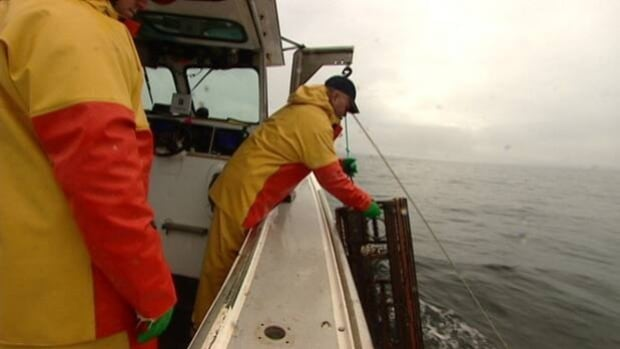 Lobster fishermen at sea. New Brunswick and Prince Edward Island fishermen are arguing over whether to increase the minimum size of lobsters that can be caught in the Northumberland Strait.