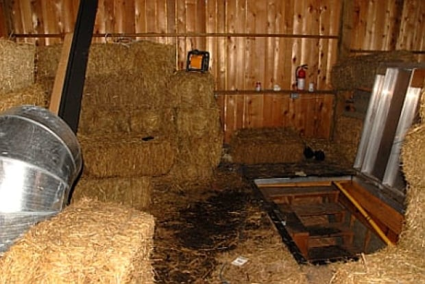 Underground grow op found under fake horse paddock british columbia cbc news - Underground dog houses ...