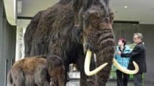 220-mammoth-cp02417039