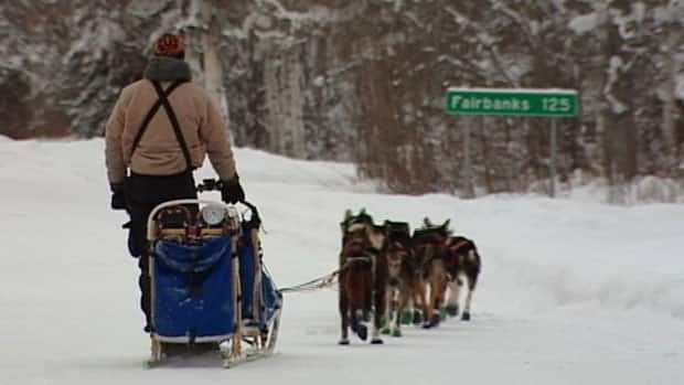 A musher departs a checkpoint heading for the finish line of the 2013 Yukon Quest sled dog race in Fairbanks, Alaska.