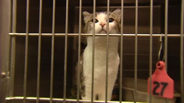 It normally costs the Saint John shelter about $86 to spay a female cat and about $56 to neuter a male, but the college is charging $25 and $10, respectively, for the same service.